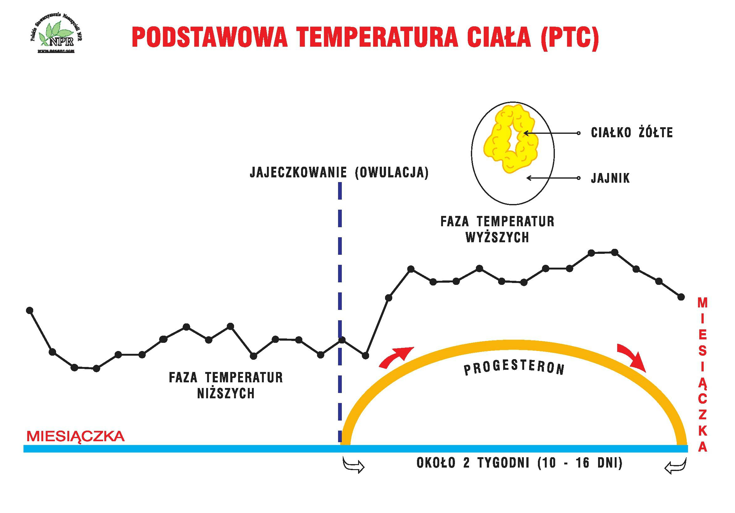 podstawowa temperatura ciała