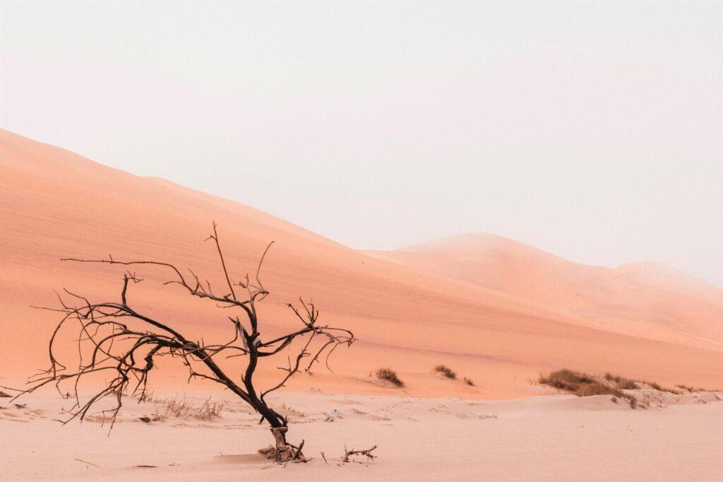pustynia i drzewo uschłe